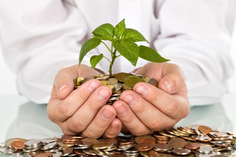 Plantas que traen prosperidad en nuestro hogar for Planta del dinero feng shui